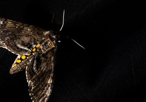These tiny sensors can hitch a ride on mothback – TechCrunch